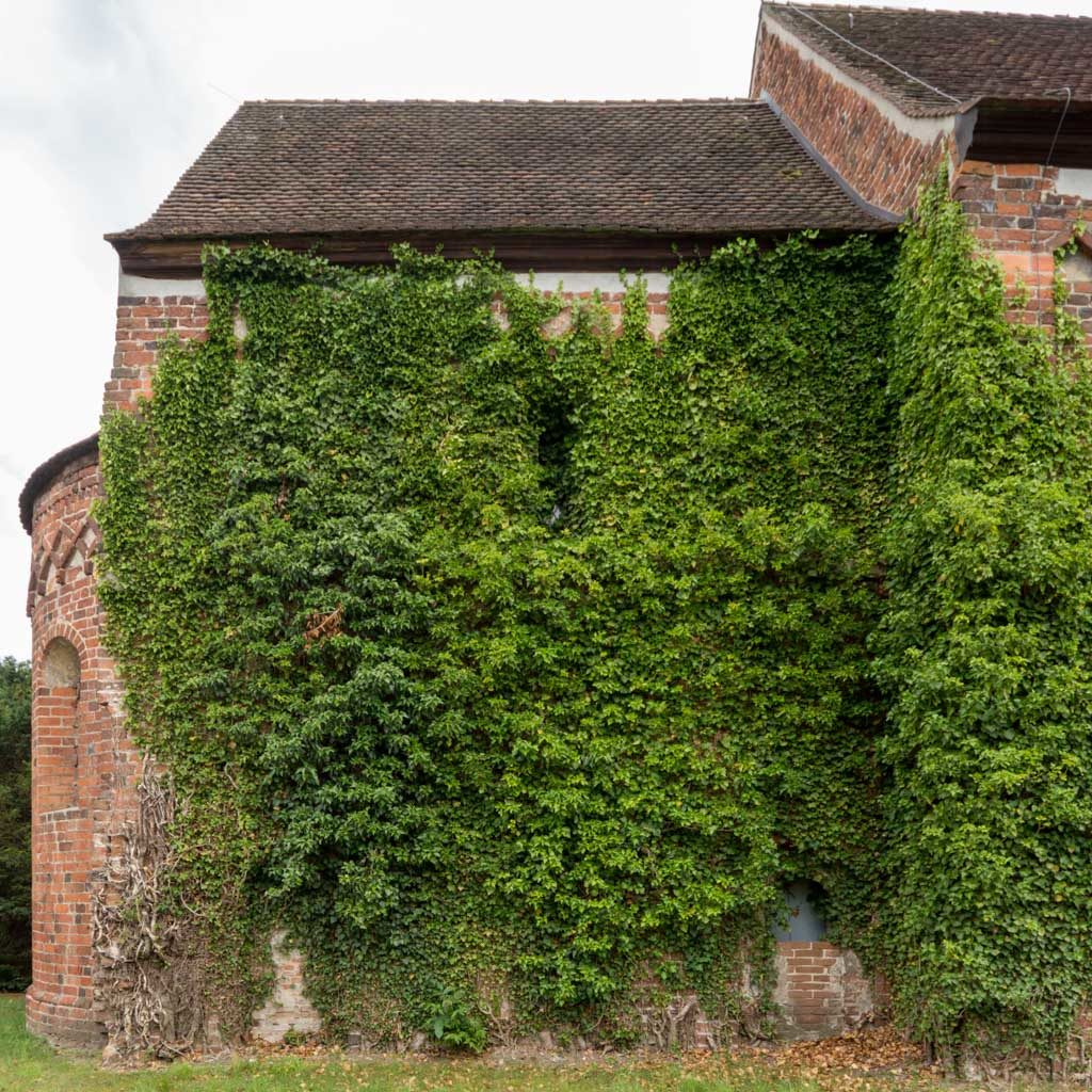 Stark bewachsene Nordwand des Chors mit ehemaliger Priesterpforte und Rundbogenfenster.