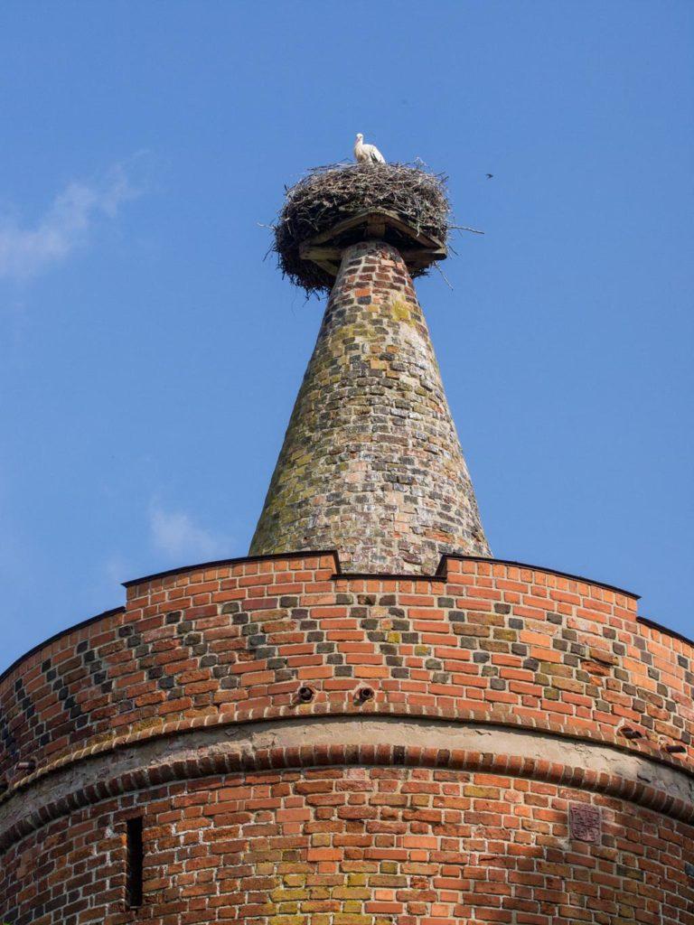 Spitze des sogenannten Storchenturms aus dem 15. Jh., dem letzten erhaltenen Bauwerk der Vorburg.